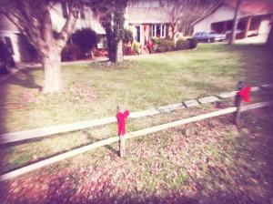 Christmas2011-Day1 018