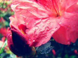 spring 005