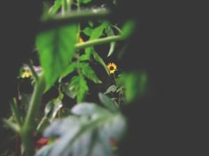 summer 020